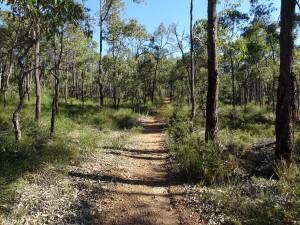 Baz's local bush track