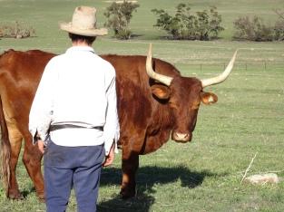Cob & Long Horn