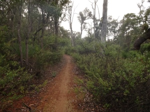 Early morning, light rain heading towards Jarrahdale from the Wungong campsite