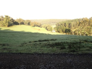 Pretty early morning view just out from Dwellingup