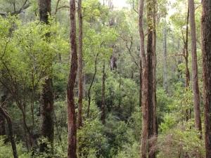 Jarrah forest view from Bidjar Ngoulin campsite