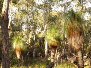 Grass tree sentinels
