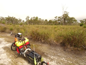 Karri forest gives way to swamp