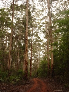 Karri Forest & Munda Biddi