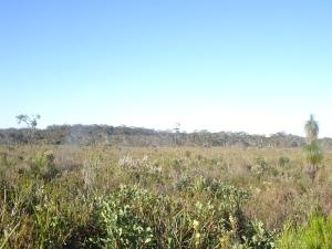 150814 swamp views
