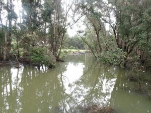 floodlands