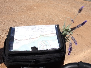 Lavender from the old Balladonia telegraph station