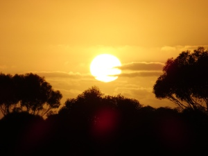 Sunrise over the Mallee