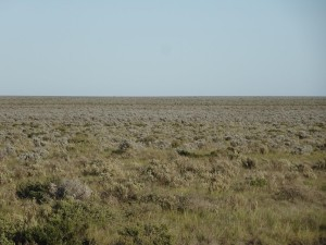 A closer view of the Nullarbor