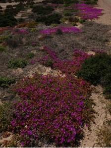 Pretty purple along the way