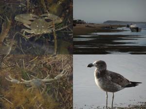 Baird Bay natives