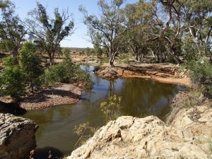 Kanyaka Waterhole. Unfortunately still used for watering stock, so it is not inviting. It would be paradise if the stock couldn't access it