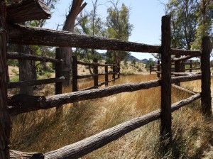 Restored cattle race, Moralana Scenic Route. Made from native pine