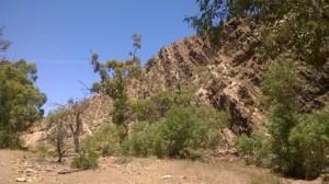 As you'd expect, plenty of cliffs along Bunyeroo Gorge