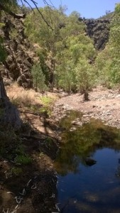 It was cool and nice in the shade, Bunyeroo Gorge