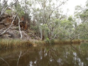 There's permanent water at Wilpena Gorge