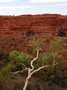A tenacious red-river gum with a spectacular view