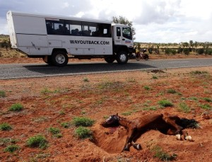 Incompatible road users. The young horse was dying its front legs gouging out a trough