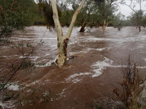 Now it's a flood. Amazing. Little wonder they say never camp in a dry river bed