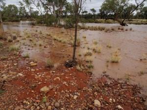 My floodway is still rising. The little tree was not in water earlier