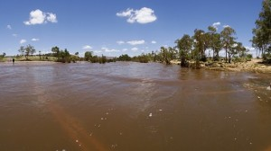 Amazing to see. Locals had come 130 km from Alice Springs to check it out. It is not a common sight