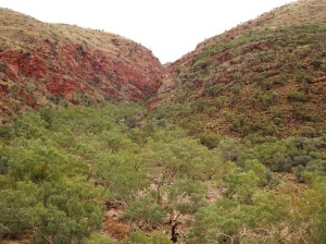 View to the gorge from the carpark lookout