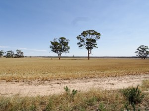 The Wheatbelt, with trees
