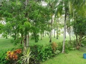 Garden and rain