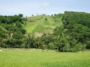 Vivid greens, rice paddies and trees