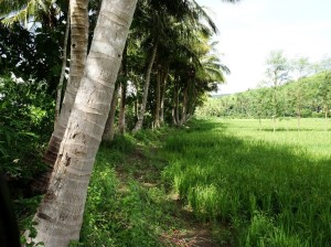 Lined by coconut palms