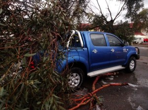 Someone's Hilux took a tree