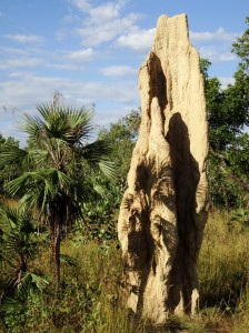 They are called Cathedral Termite Mounds and can reach 5 metres high. Which is quite a structure for an animal barely more than a few millimetres