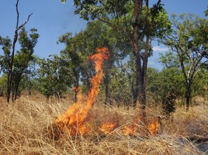 Australia is fanatically obsessed with reducing fire risk, so the country is permanently ablaze in a low-level grass-burn to reduce high intensity fire risk. Am sure it's lethal for biodiversity though.