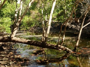 A billabong. A crocs favourite haunt. We were very observant and cautious