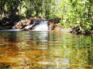 There's an easy paved <1500 meter Shady Creek Walk between Buley and Florence Falls. Any wild spontaneous step off the path and a short 50 meter through the grass nets you your own pool. Or two. Or many. Here though I share it with some other intrepid pool-huntersd