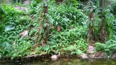 Ferns along the El Questro Gorge chasm
