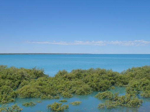 Tide coming in taking over the mangroves