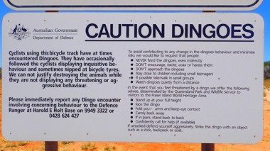 How to deal with dingoes