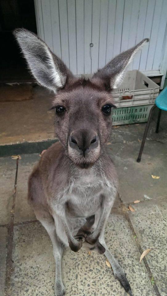 5 kute kangaroo Donnelly