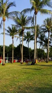 Palm tree setting of Mindil Beach night markets