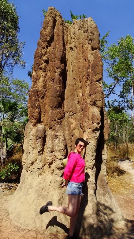 170615 Mag termites 6