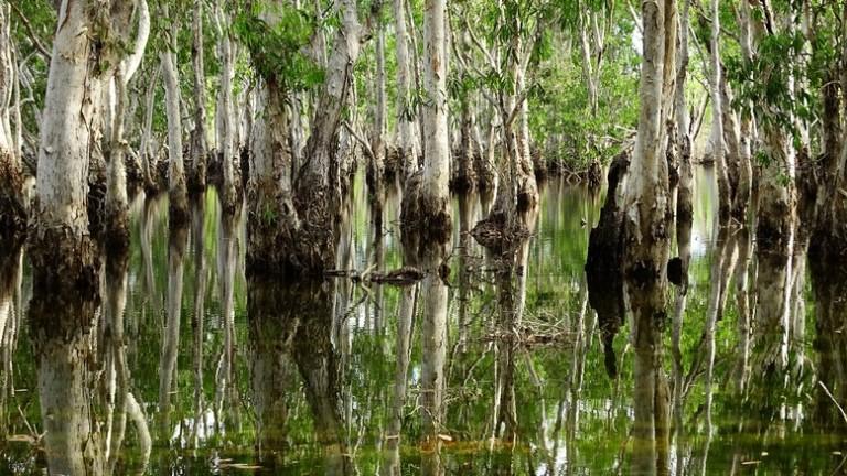 170617 Tabletop swamp 3