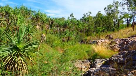 Dense vegetation around Nudies