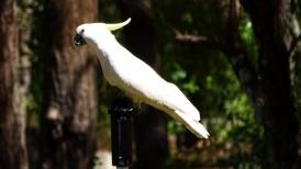 Impressive bird