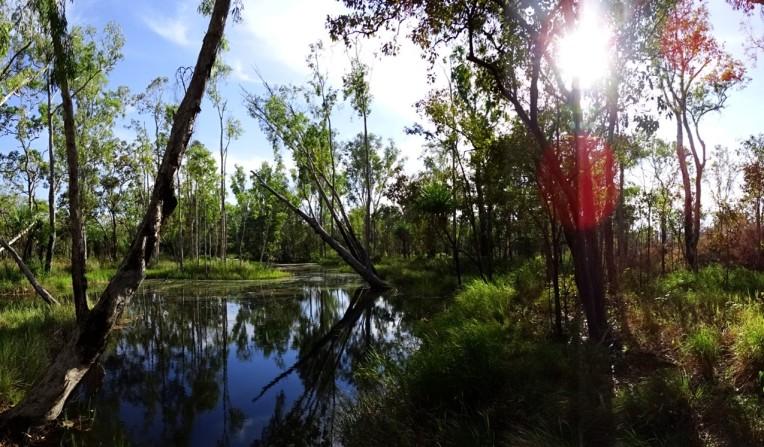 George Creek. Be Crocwise!