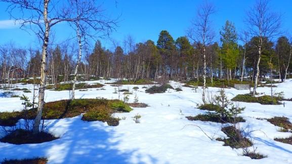 Random snow-on-ground-forest-snap