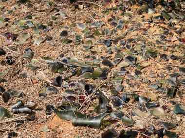 Broken glass lay everywhere