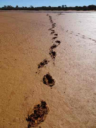In 2.5 million years my footprints will amaze some anthropologist